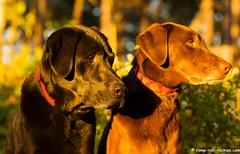 Sunset with the Labraduo (KB RRR) Tags: colorado r rockymountains frontrange chocolatelabrador shyla blacklabrador