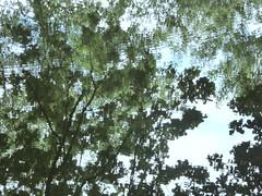 reflections of the past (polletjes) Tags: reflectie reflection reflex weerspiegeling spiegeling rimpeling lijnen lines blad bladeren blaadjes leaves bomen trees arbres baume water wasser eau slotgracht licht light groen vert green blauw blue aqua natuur nature outside