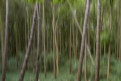 Devil's Dyke Forest (Motion Blur) (Andy 1999) Tags: devilsdyke newmarket trees