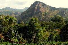 DSCN3795 (che1899) Tags: srilanka ella