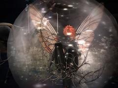 8-11-16Drow Butterfly_013 (Justine Flirty) Tags: aisling se drow fantasy sl