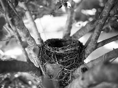 Nest (Van Allen Belt) Tags: olympus pen ep2 blackandwhite panasonic 20mm 17