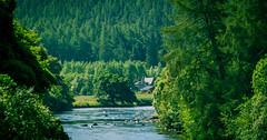 UK - Scotland - Cairngorms National Park (Marcial Bernabeu) Tags: marcial bernabeu bernabu uk united kingdom unitedkingdom greatbritain reino unido reinounido granbretaa scotland escocia national park parque nacional cairngorms
