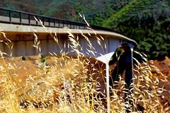 Snake Gulch Bridge (nizmo_300z) Tags: bridge snakegulchbrige snake sonora naturalbridgetrailhead weeds 1750mm sigma1750mm 60d canon canon60d