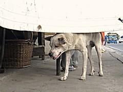 hard life (DOLCEVITALUX) Tags: streetdog dog neglected animal people canonpowershotsx50hs