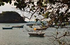 como um sonho... (Ruby Augusto) Tags: branches dof boats barcos sea ripples oceanoatlântico atlanticocean galhos flôr flower montanha