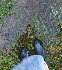... the fine art of putting one's Foot down: stand your Ground and do what really matters ... Looking Down Feet Galoshes Puddle After The Rain Grass Shoe Field Personal Perspective Green Color Outdoors Nature Green Grassy Person     (Almena14) Tags: foot ground lookingdown feet galoshes puddle aftertherain grass shoe field personalperspective greencolor outdoors nature green grassy person