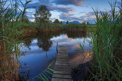 Hidden Place of Contemplation (Harald Schnitzler) Tags: pond sunset path stage quiet contemplation bijou gem nature mere weiher tmpel schilf reed riet wasser sonnenuntergang clouds sky