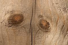 I C U (gripspix (OFF)) Tags: 20160823 natur nature pflanze plant wood holz grayed vergraut knots ste texture texxtur