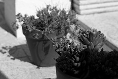 rincones (pepe amestoy) Tags: blackandwhite macro elcampello spain streetphotography fujifilm xe1 carl zeiss t planar 250 zm