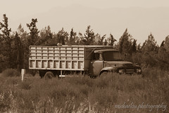Bedford (Michaelou Photography) Tags: photography field bedford lorry old