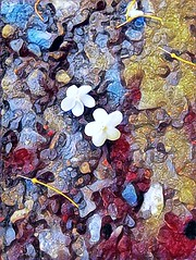 Art of falling (Simmy Sachart) Tags: art arts paint colorful nature outdoor explore flower pattern