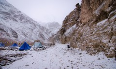 """Tribute to the Mountain Ghost"" (Sudeep Nandi) Tags: camping extreme subzero 20c tokina1116 snowleopard winter snow highaltitude himalayas shaan snowfall badweather terrian hiking mountainrange tent alpinecondition elevation outdoors harsh prayers wind thinair 14000ft"