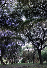 Linden alley (Gjabu) Tags:        lime alley nature park landscape trees panorama