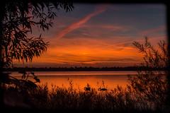 Abendrot am See (LB-fotos) Tags: 28mm deutschland germany kiron ostholstein schleswigholstein see sonnenuntergang abendrot landscape landschaft orange schwan silhouette sunset swan swans afterglow pnitzer schwne