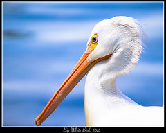 Big White Bird (MaksiMages) Tags: travel blue sea bird nature water beauty animal standing outdoors space wildlife feather olympus pelican images backgrounds scenics maksim perching maksimimages