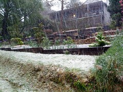 Snowing in Leura (Erland Howden) Tags: snow ice nature water landscape other flickr published earth australia places bluemountains nsw aus leura aspect
