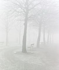 holland van vroeger (26) (bertknot) Tags: trees winter tree bomen boom baum dewinter winterinholland baumen winterinthenetherlands hollandintheseventies hollandsewinter thenetherlandsbefore1980hollandbefore1980 hollandvan1960tot1980 winterinnederlanddutchwinter