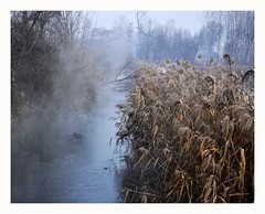 (L u c i @) Tags: gelo fog nebbia flickraward