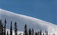 snow slope (Mr.  Mark) Tags: blue white mountain snow canada tree film silhouette contrast rockies photo angle hill stock alberta markboucher