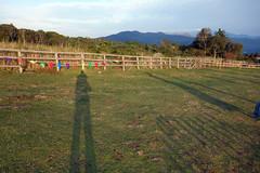 日暮れで伸びる影の写真