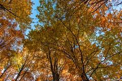 Verde-giallo-rosso (Green-yellow-red) (Abulafia82) Tags: autumn panorama color landscape colore pentax mano 1855 autunno colori paesaggi paesaggio 2012 lazio k5 abruzzo autofocus libera ciociaria sagradellacastagna valcomino forcadacero da1855wr 1855wr pentaxk5 pentaxda1855alwr da1855alwr tappoermetico ottobre2012