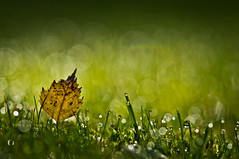 taking a bokeh bath (Dongringo) Tags: light green leave nature grass zeiss dof bokeh sony sunbath carl alpha za slt 135mm a55 sal135f18z sonnart18135 slta55v sonyalphadslta55
