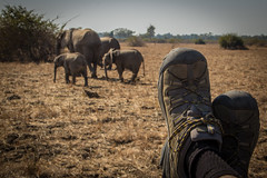 Traveling Boots - Zambian Safari