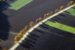 Maple in a row (Aerial Photography) Tags: street autumn trees shadow tree by maple earth herbst landwirtschaft row aerial line soil agriculture bume schatten baum fs autumntrees luftbild alignment erde leaftree luftaufnahme obb ahorn lineoftrees reihe laubbaum strase deciduoustree 24102004 baumreihe rowoftrees herbstbume foliagetree 7538253 strasenverkehr fotoklausleidorfwwwleidorfde 20d01751 7538150
