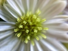 (namroff) Tags: flower macro bokeh iphone waterdropmacro namroff nateforman