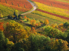 Indian Summer - Fall in the Vineyard (Batikart) Tags: road autumn trees red people orange plants mountains green fall nature colors leaves lines yellow rural forest canon germany way landscape geotagged outdoors deutschland leaf vineyard vines couple europa europe seasons quilt wine stuttgart path stripes patterns hill felder tranquility foliage growth vineyards grapes fields greenery recreation agriculture patchwork curve relaxation multicolored ursula bushes grape variation colurful 2012 indiansummer wein weinberg streifen sander g11 rotenberg vogelperspektive badenwrttemberg 2011 herbstfrbung strase 100faves 200faves birdseyeperspective batikart canonpowershotg11