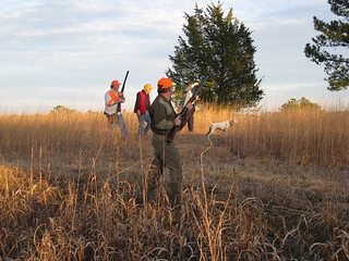Private Alabama Quail Hunting - Davis Quail 22