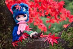 Little blue bear up a tree