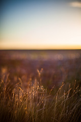 (drfugo) Tags: blue light sunset shadow sky beach grass seaside bokeh smooth silk depthoffield canon5dmkii nikon55mmf12s nikkors55mmf12typeiv