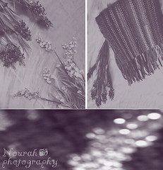 (Nourah Almajaishy) Tags: flowers rebel pain bokeh memories dash future dreams feeling past shawls  nourah            almajaishy