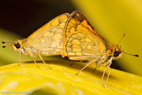Skippers for the New Year