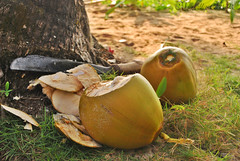 Fresh Buko Juice (Bella Abelita) Tags: food philippines masbate