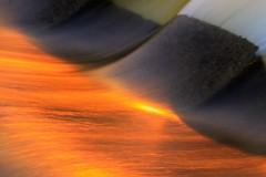 Fire and Water (trekok, enjoying) Tags: park m qc 11113 049m terrebonn elementsorganizer 1psd