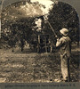 Summer spraying in apple orchard, Hilton, New York, USA - circa 1915 (Aussie~mobs) Tags: fruit vintage orchard overalls farmer appleorchard pesticide orchardist chemicalspray fruitspraying