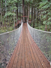 Bridge to the Forest (nfin10) Tags: bridge alaska canon walking island rainforest powershot juneau national douglas canonpowershot tongass canonpowershotsx210