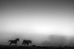 Land of Oblivion (Photambule) Tags: blackandwhite horse france landscape cheval countryside sony land paysage campagne pays oblivion mayenne blancetnoir oubli