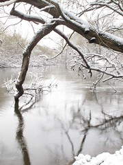 Silent Flow (duckinwales) Tags: winter snow shropshire riversevern willow crackwillow salixfragilis