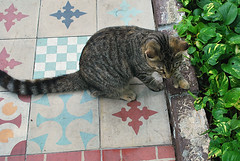Key West (Florida) November 2012 0278bRi 4x6 (edgarandron - busy!) Tags: cats cat keys feline florida kitty kitties keywest hemingway floridakeys hemingwayhome