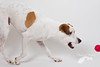 Geddit (Penelope Malby Photography) Tags: red dog canine whippet brownandwhitedog dogandball whippetcross tanandwhitedog penelopemalbyphotography