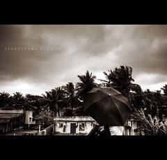 The Dark Dreams... (Premkumar_Sparkcrews) Tags: india tree clouds dark alone loneliness wind dreams chennai tamilnadu southindia umberlla premkumar waiti nikond3100 sparkcrews premkumarphotography sparkcrewsstudios premkumarsparkcrews sparkcrewscom inlovewithumberlla premkumarsachidanandam thedarkdreams