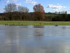 A flooded Abbey Meadow (Maggie @ Abingdon) Tags: winter thames reflections flooding floods abingdon abbeymeadow abingdononthames