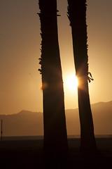 @IMG_4603 (bruce hull) Tags: sanfrancisco california aquarium coast highway chinatown pacific wharf whales coit emabacadero