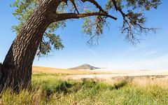 As You Always Would (John Westrock) Tags: garfield washington nature steptoebutte landscape tree bluesky canoneos5dmarkiii canonef1635mmf4lis