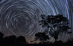 StarTrails (gabrielmiyahara) Tags: startrail longexposure star night nature tree dark lighttrail circular circle