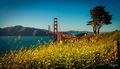 Golden Gate Bridge  (T.ye) Tags: golden gate beach water sea flowers flower tree red birdge mono
